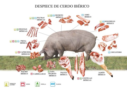 Diseño Cartel Despiece Cerdo Iberico.jpg